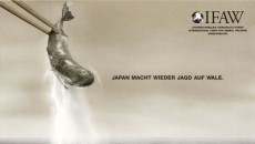 IFAW Springer und Jacoby, Japan is whaling again, Plakat